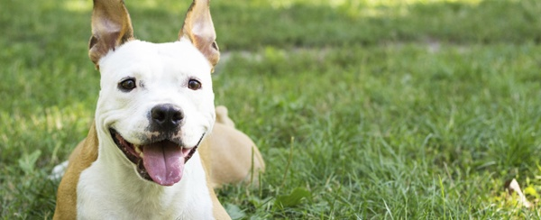 Ruff Ruff, Fido says  - Our new homes are awesome  - they have a dog park and everything